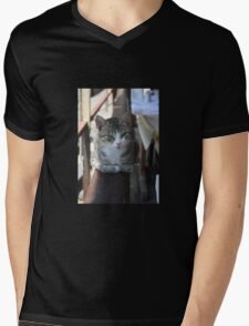 Cute Tabby Cat - Sitting On The Fence Mens V-Neck T-Shirt