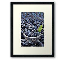 Honeysuckle berry fruits Framed Print