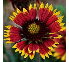 Indian Blanket Square Photographic Print