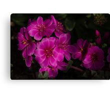 Silky Pink Cactus Blooms Canvas Print
