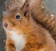 Cute Red Squirrel Sticker