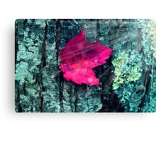 woods 4 Canvas Print