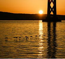 San Francisco Bay Bridge Sunrise by Georgia Mizuleva