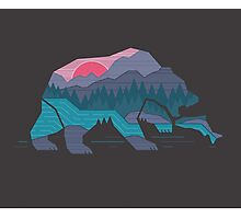 Bear Country Photographic Print