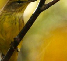 Palm Warbler Sticker