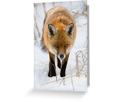 Winter Red Fox Greeting Card