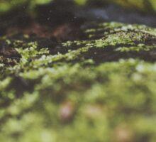 Moss Sticker