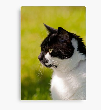 Black & White Cat Portrait Canvas Print
