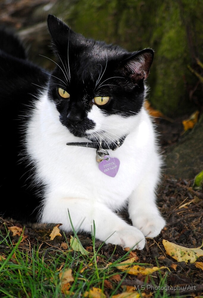 Black & White Cat by M.S. Photography/Art