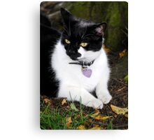 Black & White Cat Canvas Print