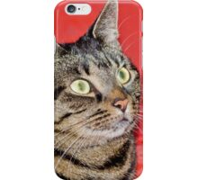 Mackerel Tabby Portrait iPhone Case/Skin