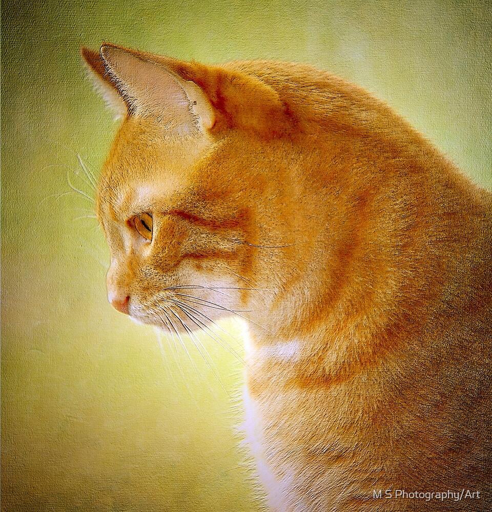 Tabby Cat Portrait by M.S. Photography/Art