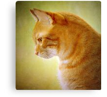 Tabby Cat Portrait Canvas Print