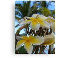 tropical zone - zona tropical Canvas Print