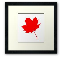 Maple red leaf Framed Print