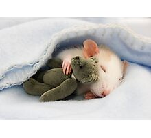 Baby rat with teddy Photographic Print