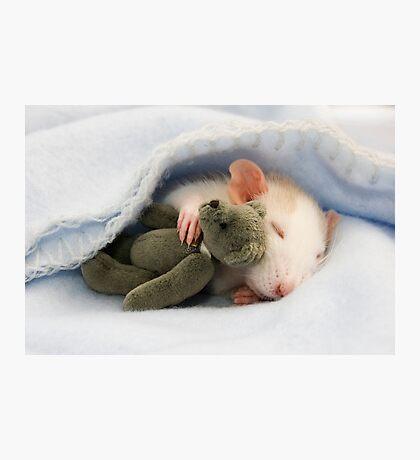 Baby rat with teddy Photographic Print
