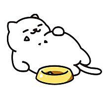Neko atsume - Tubbs cat Photographic Print