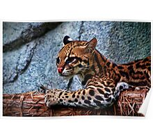 Ocelot Painted Poster