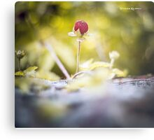 The lonely strawberry II Metal Print