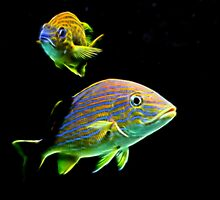 Glow Fish by Judy Vincent
