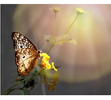 Butterfly Glow Photographic Print