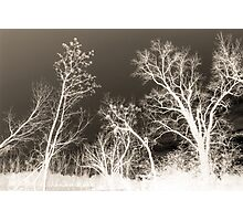 Arbor Joy Photographic Print