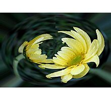 Yellow Daisy in a Bubble  Photographic Print