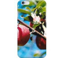 Pick Your Own Apples iPhone Case/Skin