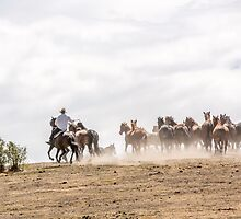 Bringing in the horses by Vikki Shedden Photography