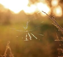 Golden Web by AbigailJoy