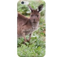 Western Grey Kangaroo iPhone Case/Skin