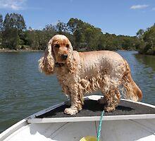 Fishing Dog by aussiebushstick