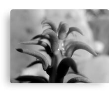 TOP VIEW OF A PRICKLY CACTUS Metal Print