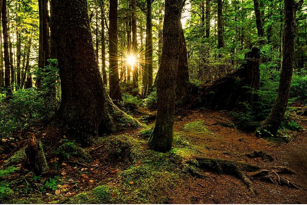 Rainforest Path by Chad Dutson