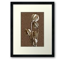 Seed Pods Macro Framed Print