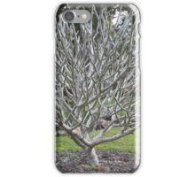 Frangipani Tree in Winter iPhone Case/Skin