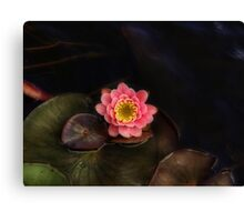 Floating Lily Canvas Print