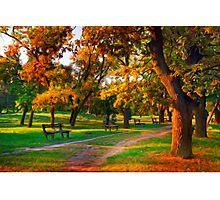 Park Forest Photographic Print