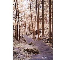 Zhangjiajie Path Photographic Print