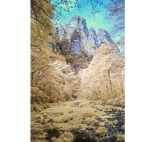 Yellow Forest Zhangjiajie Photographic Print