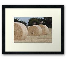 Hay Goosey, Goosey. Framed Print