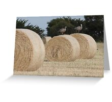 Hay Goosey, Goosey. Greeting Card