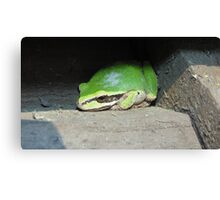Ribbit, Ribbit Mofo Canvas Print