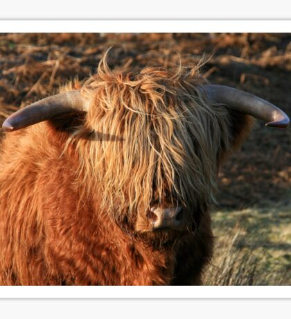Highland Cattle - Highland Cow - Highlander Sticker