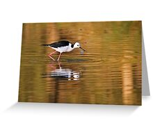 Black-winged Stilt ~ On Golden Ponds Greeting Card