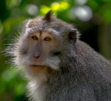 Monkey Glamour Shot Sticker