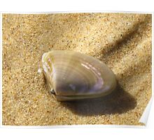 Pipi on Textured Sand  Poster