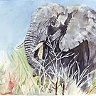 Wildlife of Africa  by Maree Clarkson