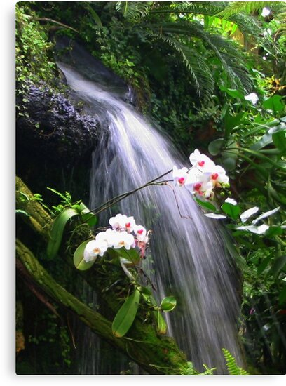 Orchids Waterfall Paradise by ienemien
